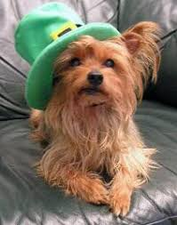 fun things to do with your dog on st patrick u0027s day the dog guide