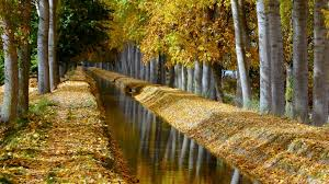 birch tree wallpaper hdwallpaper20 com