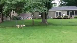 Dog In The Backyard by Dog Running Around In The Backyard Youtube