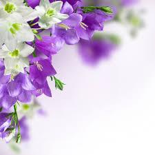 purple flower white background wallpapersafari
