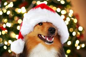 pet christmas christmas the best dog by dogpacer
