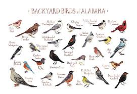 Alabama birds images Backyard birds of alabama field guide art print handmade jpg