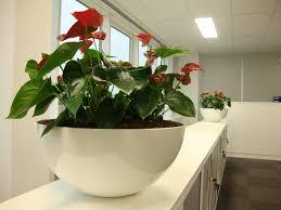plantes bureau location des plantes de bureau
