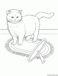 download abyssinian animal coloring pages