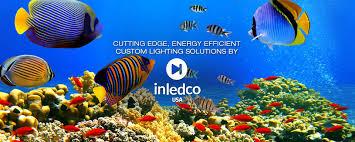 aquarium design international custom acrylic aquarium design