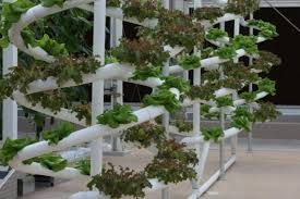 the easiest indoor gardening method hydroponic growing