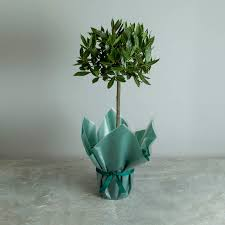 tree gifts by post send a tree present tree2mydoor uk