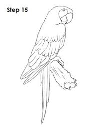 scarlet macaw coloring page aecost net aecost net