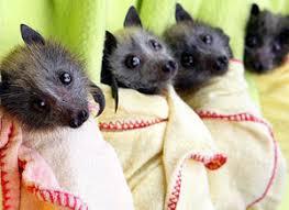 bats for sale bats for sale