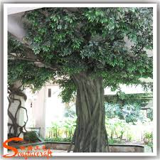 ornamental plants with names images photos pictures a large