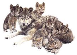 wolf and cubs ideas wolf and