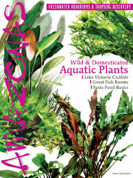 Planted Aquarium Aquascaping Planted Aquarium Enthusiasts Welcome To Amazonas Magazine