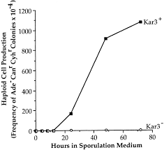 the yeast motor protein kar3p is essential for meiosis i jcb