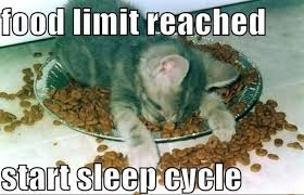 Sleepy Cat Meme - 25 funny cat memes that will make you lol