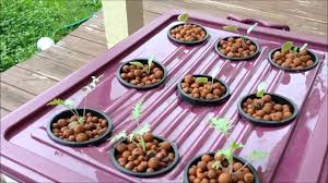 Hydroponics Vegetable Gardening by Video 1 Growing Vegetables Outdoor Hydroponics Deep Water