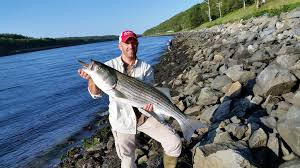 august 7th cape cod canal fishing report