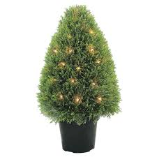 Small Indoor Trees by National Tree Company 15 In Mini Tea Leaf 1 Ball Bush With Dark