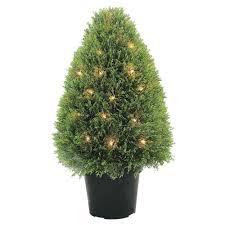 Fresh Cut Christmas Trees At Menards by Trees Trees U0026 Bushes The Home Depot