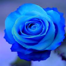 imagenes con flores azules dia de la maestra 16 fotos de flores azules fotos de flores fondos tumblr