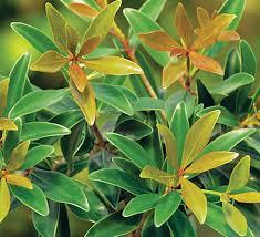 no sun plants shrubs southern living plants