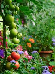 edible landscaping growing your own food hgtv