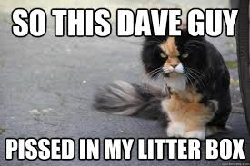 Angry Cat Memes - angry cat memes quickmeme