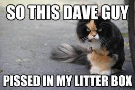 Angry Cat Meme - angry cat memes quickmeme
