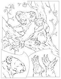 koala coloring pages coloring pages coloring pages kids