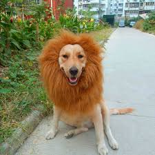 lion halloween costume aliexpress com buy pet costume lion mane wig for dog halloween