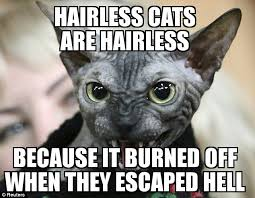 Hairless Cat Meme - i hate hairless cats imgur