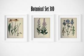 botanical print set of 3 wildflower wall art antique botanical