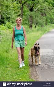 belgian shepherd uk woman with a belgian shepherd dog walking on the roadside in the