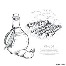hand drawn olive oil and olive field vector sketch illustration