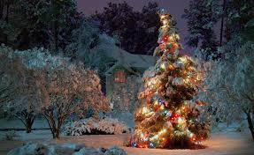 new year christmas tree night holiday home beauty ace wallpaper
