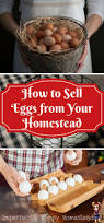 Best Backyard Chickens by 305 Best Poultry Health U0026 Well Being Images On Pinterest Raising