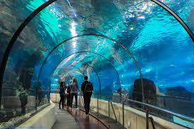 the aquarium of barcelona barcelona museum