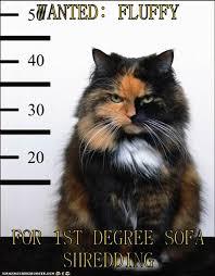 Shredding Meme - i can has cheezburger shredding funny internet cats cat memes