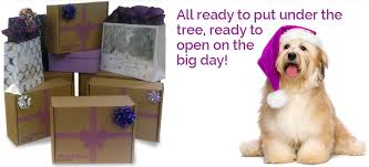 christmas gift boxes from petstay latest news and offers from