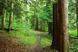 File forest trail trees west virginia forestwander jpg