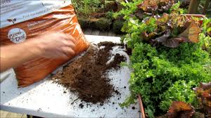 Vegetable Garden Soil Mix by Understanding Bagged Garden Soil Products For Containers What