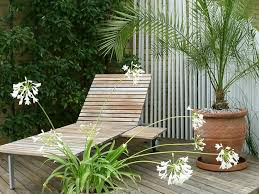 Tropical Plants For Garden - tropical plants for sizzling summer containers