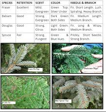 the characteristics of common christmas tree species north pole