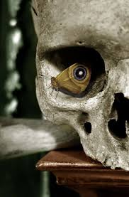 a butterfly perches in the eye socket of a human skull creating