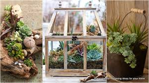 succulent arrangements fill your home with glamorous simple diy succulent arrangements