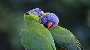 Parrot Meme - parrots know your meme