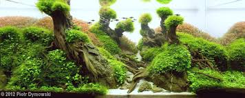 Java Moss Aquascape Aga Aquascape Winners 2012
