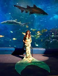 do you want to be a mermaid scubaverse reviews merthology