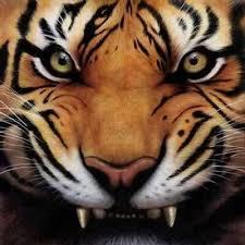 tiger eye tiger eye bhr