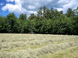 hay shavings l lake christmas tree farm llc