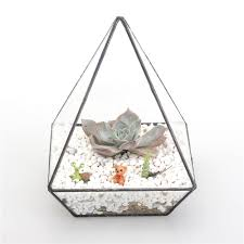 popular succulent holder buy cheap succulent holder lots from
